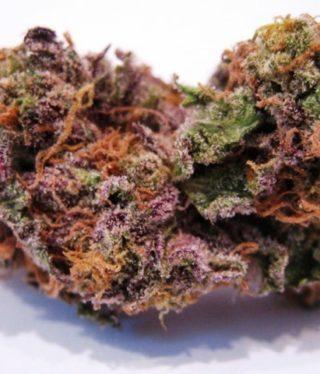 Buy Cherry Gorilla Marijuana