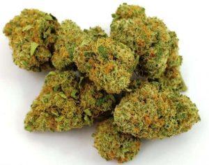 Buy Infinite Euphoria Marijuana