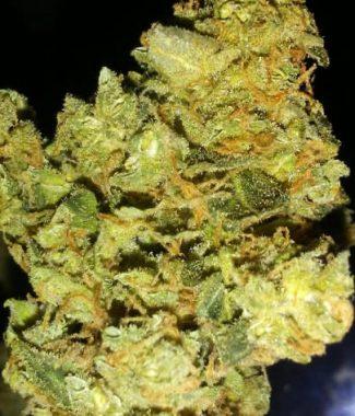 Buy Somari Marijuana Strain