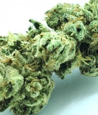 Buy Tahoe OG Marijuana Online
