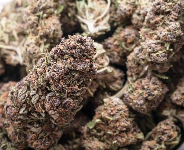 Fennel Kush Marijuana Strain